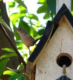 Birdhouse with a sparrow ontop