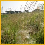 Native Grasses and Plants